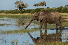 Ein Elefantenparadies wird zerstört