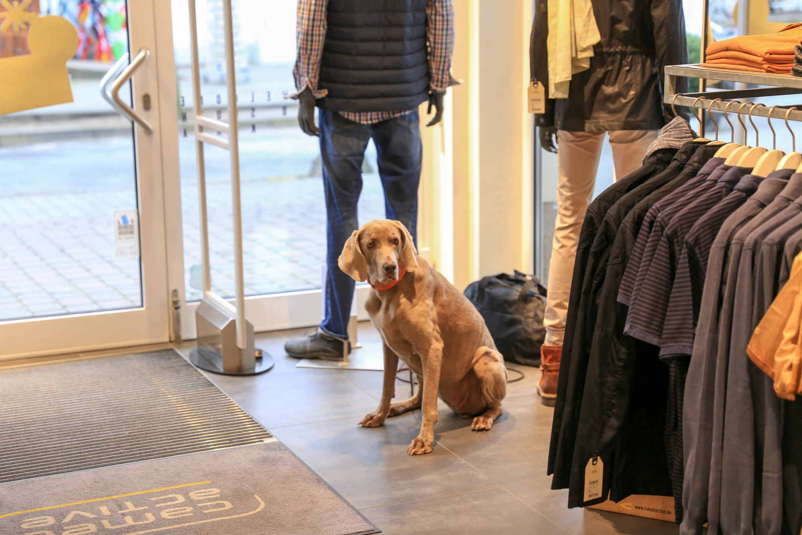 Ein eleganter Hund im Camel-active Laden in Binz