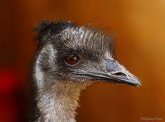 Ein Emu