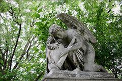 . . . ein engel auf dem st. marxer . . .