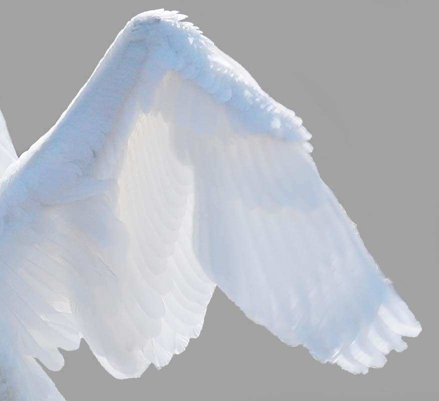 Ein Engel ?!