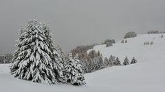Ein erster Wintergruss.....