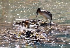 Ein etwas unsicheres Nest