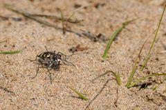 Ein farbiger Krabbler