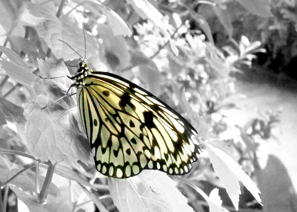 Ein farbiger Schmetterling......