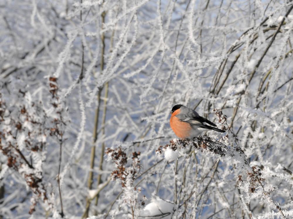 Ein Farbklecks in der Winterlandschaft