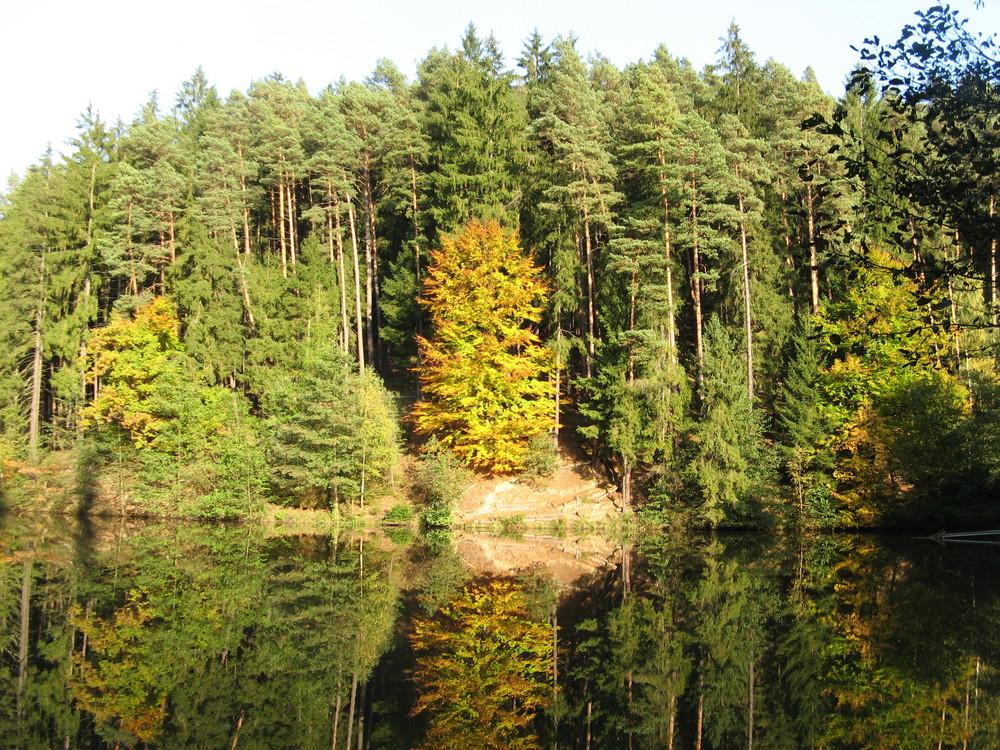Ein Farbklecks in solch fader Herbstwelt