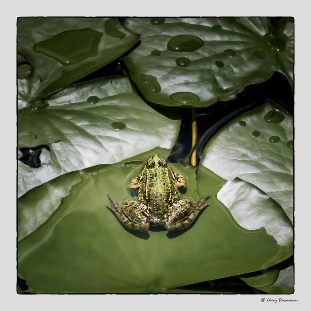 Ein fast gut getarnter Frosch.. ;o)
