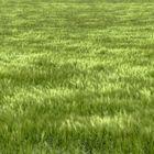 Ein Feld