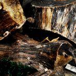 Ein Feuer im Ofen entfachen mit dem Holz der Bäume