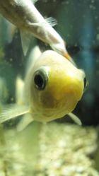Ein Fisch (2)