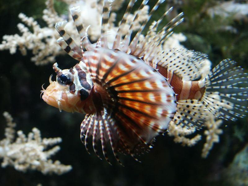 Ein Fisch!!!