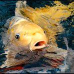 Ein Fisch wie gemalt