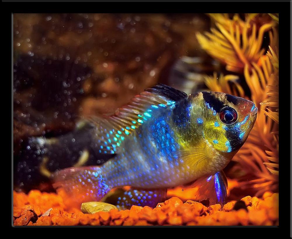 Ein Fischlein aus meinem Aquarium...