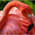 Ein Flamingo Namens Ingo....