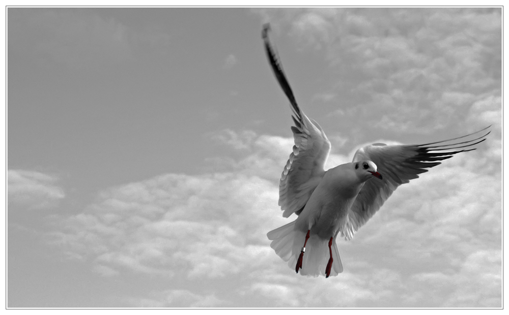 - ein Flügelschlag... -