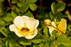 Ein Foto zum World Bee Day - Pfalz - 02.05.2019