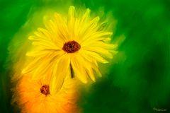 Ein Freitagsblümchen