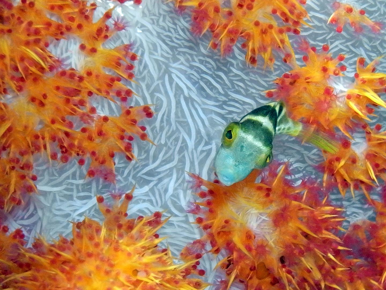 Ein Frischling im Riff...