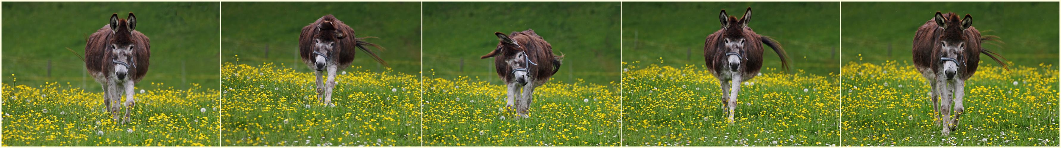 Ein fröhlicher Esel