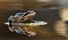 Ein Frosch