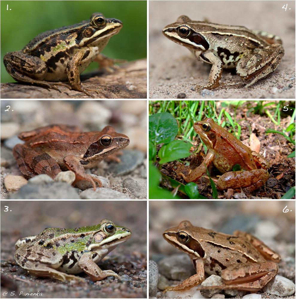 Ein Frosch-Rätsel Foto & Bild | tiere, wildlife, amphibien ...
