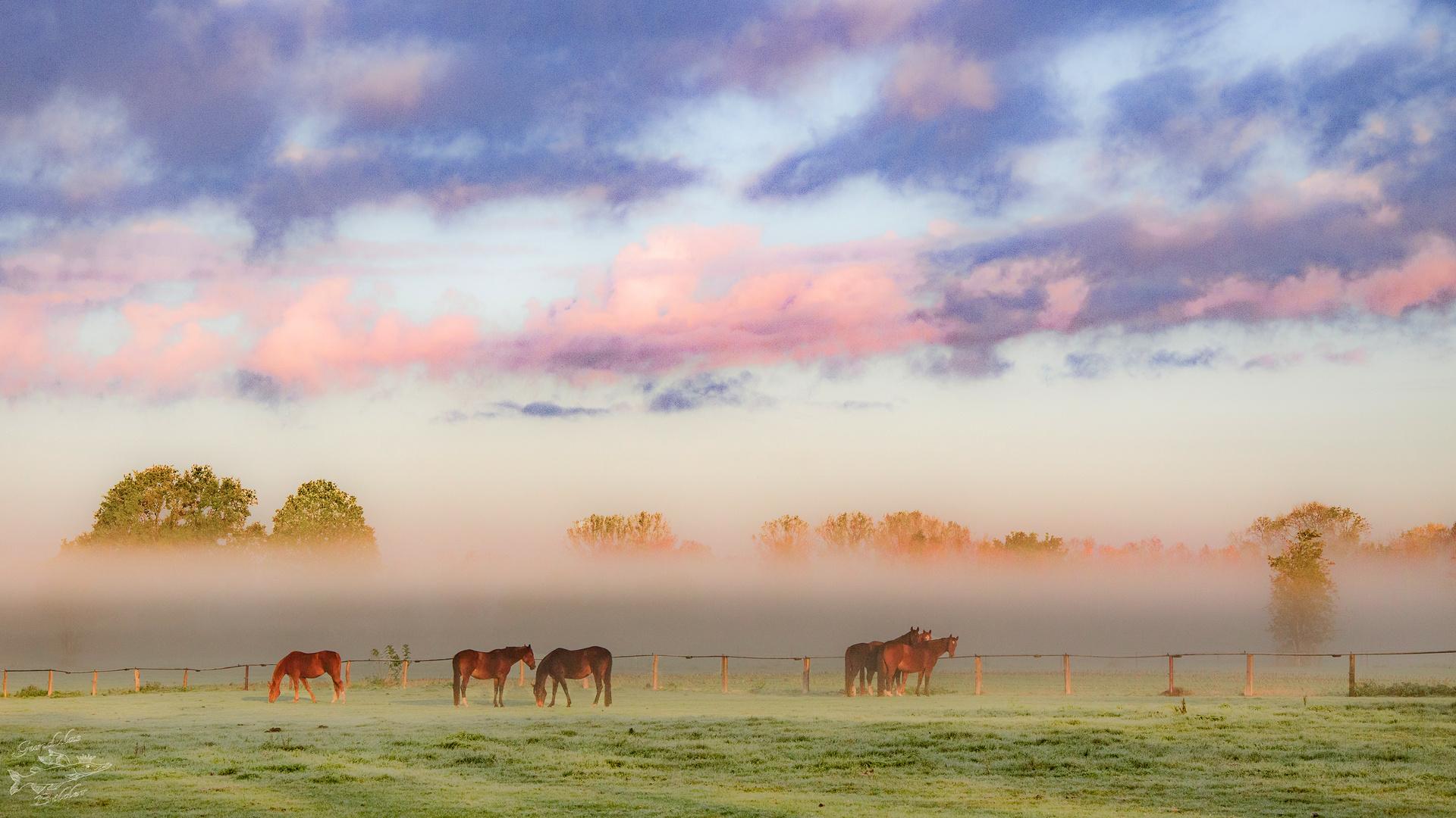 Ein frostiger Oktobermorgen