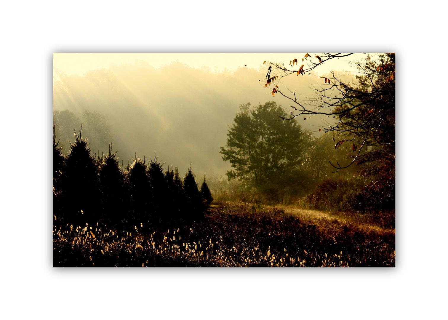 Ein früher Herbst-morgen