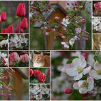 Ein Frühlingsabend...