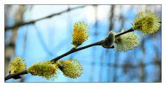 Ein Frühlingsbote zum Aufwärmen ;-)