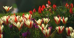 Ein Frühlingsgruß an alle Besucher