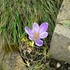 Ein Frühlingsgruß aus L.E.