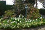 Ein Frühlingsgruss aus meinem Garten