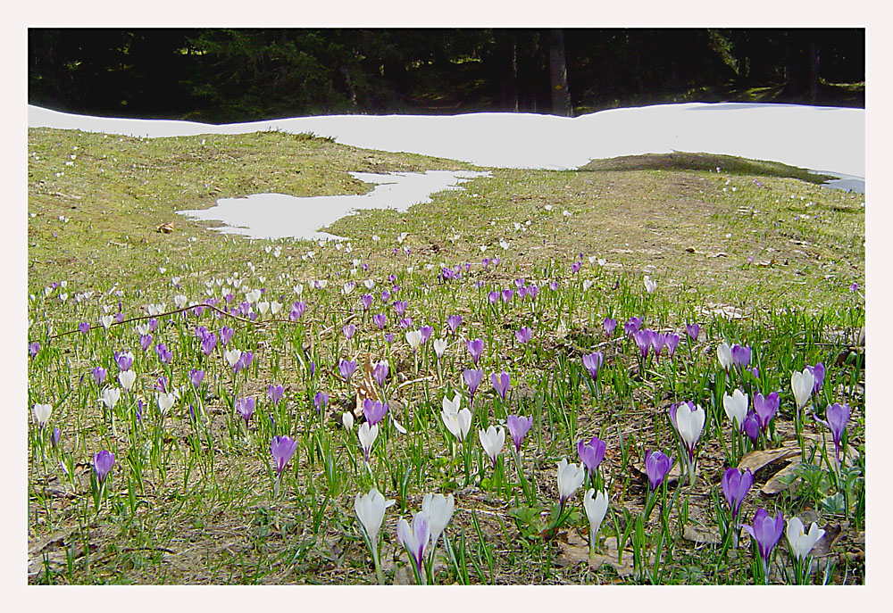Ein Frühlingsgruß :-)