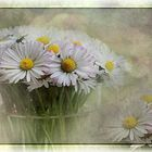 - Ein Frühlingsgruß mit Gänseblümchen -