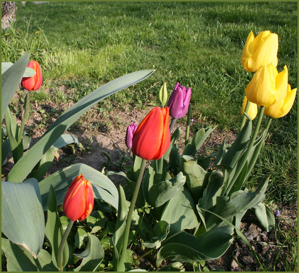 Ein Frühlingsgurß