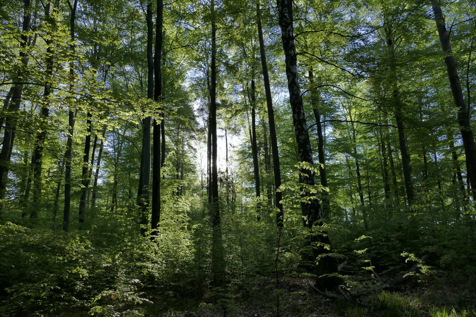 Ein Frühlingsmorgen im Wald