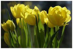 Ein Frühlingsstrauß