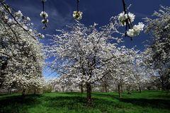 Ein Frühlingstraum in Weiß