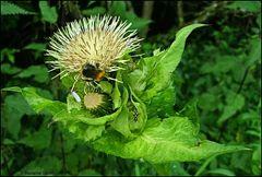 Ein Futterplatz für viele Insekten...
