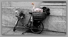 """Ein """"Gans"""" tolles Fahrrad !................#15.2484#34/50"""