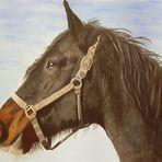 Ein ganz besonderes Pferd - Komet