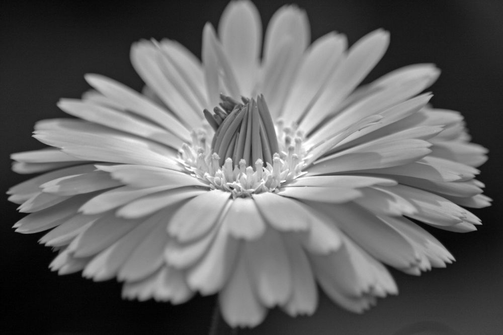 Ein Garten ist eine Kunstnatur. (Robert Musil)