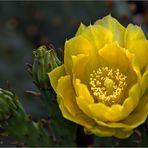 - ein Gartenblümchen -