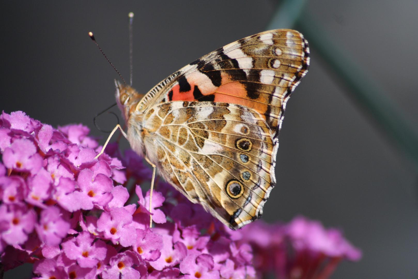 Ein Gast in unserem Garten