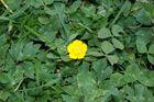 Ein gelber Fleck