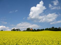 ein gelber Hügel auf Rügen