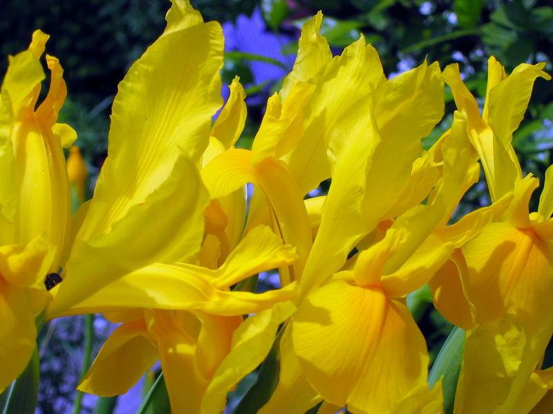 ... ein gelber Vorhang ...