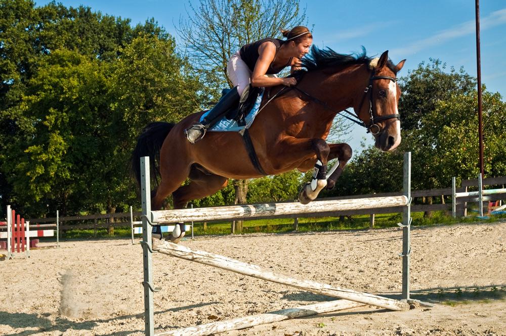 ein gelungener Sprung für Reiterin und Pferd