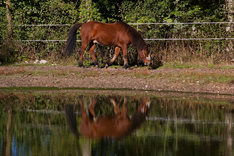 Ein glückliches Pferd